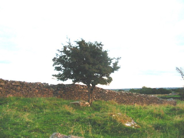 Fairy Bush At Quinaltagh
